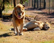 Shy-Boy's lazing in the sun ... Bad Boy's thinking about lunch ..