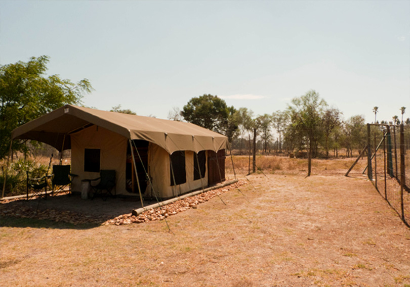 Radium tent - surrounded by lion enclosures on all 4 sides with a narrow fenced off entryway