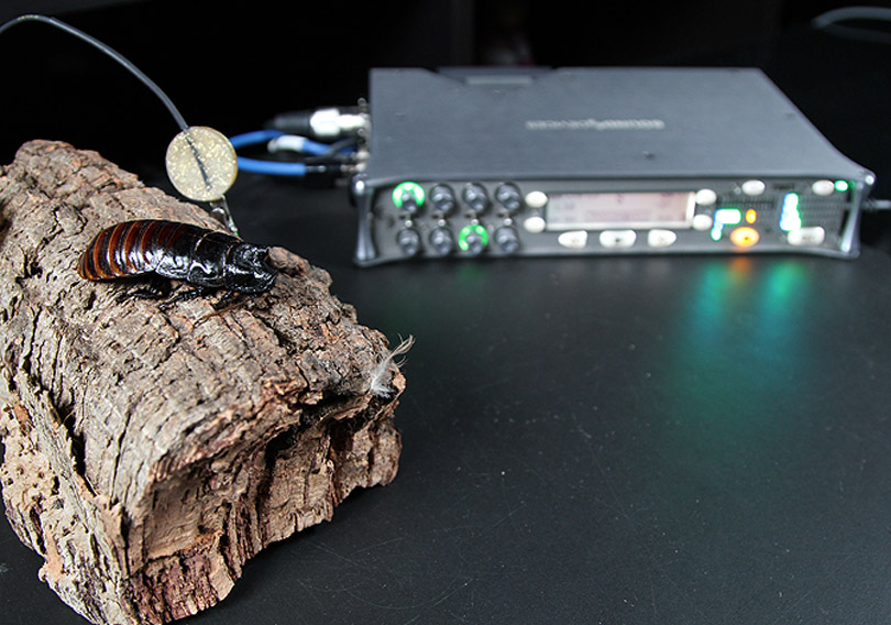 Cockroach with Sound Devices 788T