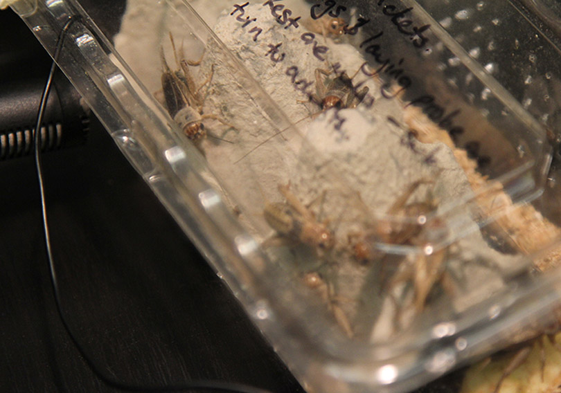 Unpacking the Crickets